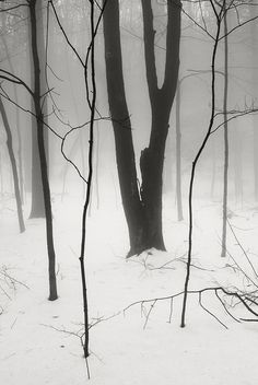 Fog Snow Woods by frntprchprss on Flickr.