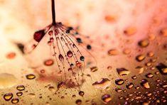 macro-nature-photography-ivelina-blagoeva-22