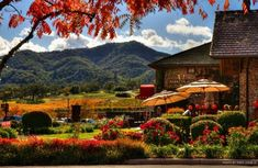 Yountville...a charming town in Napa Valley with wonderful bakeries and restaurants and fabulous wine tastings...be sure to visit Hope & Grace. One will not leave empty-handed, I promise as it will be difficult to pick just one fav wine!