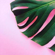 Plants on Pink LITTLE PAPER LANE www.instagram/com/littlepaperlane
