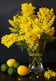 bouquets that I buy for myself (Mimosa)