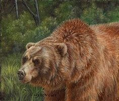Grizzly Bear Oil Paintings | Wildlife and Nature Artist Diary