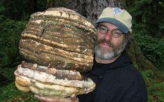 ¿Por qué este nuevo hongo podría destruir a Monsanto?