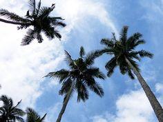 6/1(水)バリ島ウブドのお天気は晴れ。室内温度28.3℃、湿度71%。朝方はかなーり冷え込みましたが、太陽が出てくると、グンと気温が上昇します!とっても良い天気♪