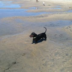 Norm at the beach