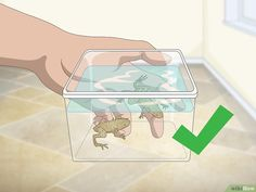 3 Ways to Care for African Dwarf Frogs - wikiHow African Frogs, Dwarf Frogs, Frog Tank, Turtle Care, Pet Frogs, Cool Fish Tanks, Small Frog, Freshwater Aquarium Fish, Pets 3
