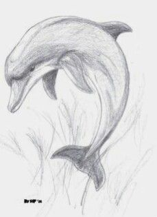 Animal Drawings Images For > Pencil Drawings Of Dolphins Art Drawings Sketches Simple, Pencil Art Drawings, Animal Drawings, Easy Drawings, Pencil Sketches Of Animals, Drawing Ideas, Animal Sketches Easy, Pencil Drawing Tutorials, Drawing Animals