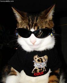Community Post: 101 Cats Wearing Sunglasses