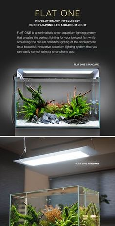 Led Lighting for Aquarium Plants . Led Lighting for Aquarium Plants . Nano Aquarium, Home Aquarium, Nature Aquarium, Aquarium Design, Planted Aquarium, Aquarium Fish, Aquarium Landscape, Green Porch Light Meaning, Fish Tank Themes