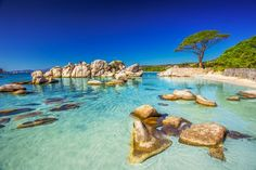Photo about Famous pine tree on Palombaggia beach with azure clear water and sandy beach on the south part of Corsica, France. Image of italy, corsica, picturesque - 78521043 Beach Images, Beach Pictures, Corsica, Most Beautiful Beaches, Beautiful Places, Porto Vecchio, Beach Holiday, Sandy Beaches, France Travel