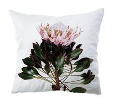 The Design Hunter Outdoor Scatter Flower Cushions Scatter Cushions, Throw Pillows, Weylandts, Pillow Fight, Pillow Talk, Coffee Lover Gifts, Coffee Lovers, Soft Furnishings, Cute Designs