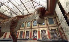 """Google riporta i dinosauri in vita nella sua Galleria di Scienze Naturali Sono sempre decisamente entusiasta delle iniziative di Google in senso culturale. Quando viene allestita una nuova """"Galleria"""" dalla grande G, mettendo in campo tutta la sua tecnologia di scansione tr #google #scienzenaturali"""