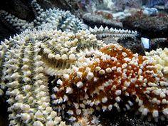 Estrellas de mar / Starfish