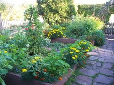 Organic Matters: Thwart Insect Pests With Trap Crops Basically, plant sunflowers, amaranth and blue squash.