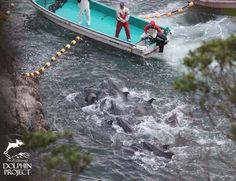 End The Senseless Slaughter In Taiji