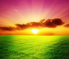 Green Field - Tapetit / tapetti - Photowall