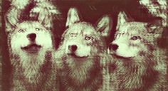 trippy wolf