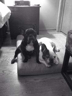 Frenchies.....love my Frenchies!!❤️