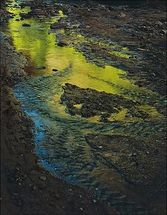 Eliot Porter  Green Reflections in Stream, Moqui Creek, Glen Canyon, Utah  September 2, 1962