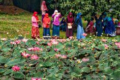 Jardim Botânico de Bogor: O Jardim Botânico mais antigo do sudeste asiático