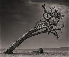 by Nick Brandt