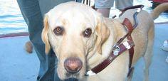 Votenaweb: pessoas com deficiência visual podem usar táxi com cão-guia?