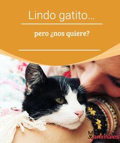 Lindo gatito... pero ¿nos quiere?  Descubre por qué los felinos, pese a ser lindos gatitos preciosos, puede que tal vez no te quiere o si, según su personalidad. #gatitos #querer #alimentación #personalidad