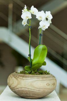 Orchid display in light wooden bowl