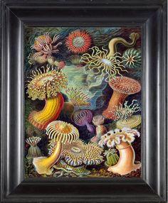 Botanical coral art print 1874 Ernst Haeckel