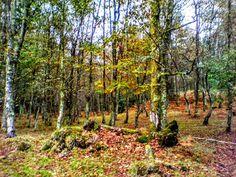 Boa tarde :D As cores fortes e quentes da serra de Arcos de no Outono