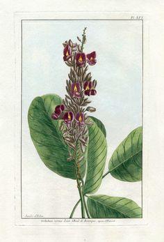 P.J. Buchoz Le Jardin D'Eden Botanical Prints 1783