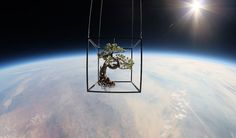Plants in space! Beautiful!