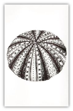 Sea Urchin Pen Drawings and Prints, made to order, fully customised. Coastal, Objects, Landscapes. £10.00, via Etsy.