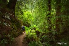 ***Walking in the forest (Muir Woods National Monument, California) by Marko Erman on 500px