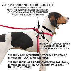 Die Leine richtig anpassen damit der Hund nicht zieht