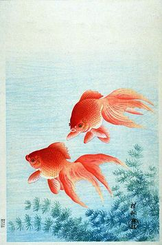 Goldfish, 1926. Ohara Koson (1877-1945)  was born in  the North of Japan with the given name Ohara Matao. Kacho-e is the Japanese word for prints of birds and flowers. And Koson Ohara is the best-known printmaker for kacho-e in the twentieth century.