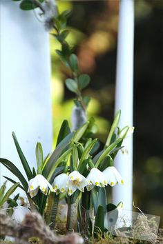 Wake up, garden! Wake up!  - Gartendekoration Frühling