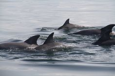 More Dolphin in Tampa Bay