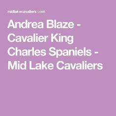 Andrea Blaze - Cavalier King Charles Spaniels - Mid Lake Cavaliers