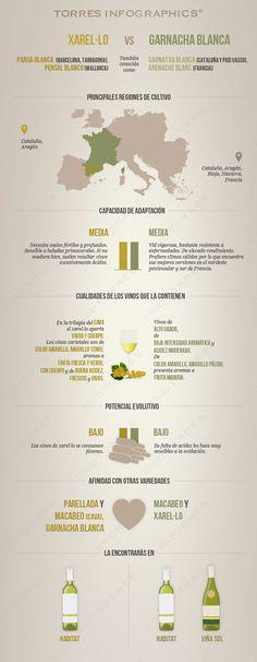 #Infografia: xarelo Vs garnacha blanca. #Vino