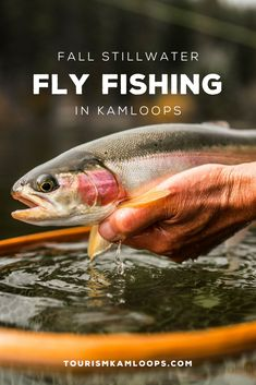 To many, the arrival of September is considered a solemn event and marks the end of summer, but to the legion of anglers it signals the start of fall trout fishing season in Kamloops. Trout Fishing, Fly Fishing, Fall Starts, Lake Water, Rainbow Trout, End Of Summer, Mornings, Behavior, September