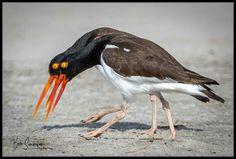 Pairs #birds Scenery, Birds, Change, Animals, Landscape, Animaux, Bird, Paisajes, Animal