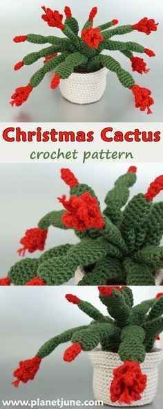 Stunning Christmas Cactus (or Thanksgiving Cactus) pattern - crochet a realistic potted plant that blooms all round. Perfect as a gift, especially to brighten up the winter months, and it never needs watering!
