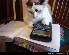 Gato haciendo los deberes