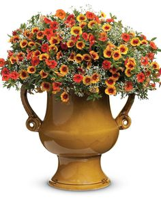 Keep your garden colorful this autumn, and enjoy a spirited Halloween, with orange and black plants.