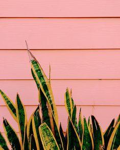 10 Photo Background Ideas for Content Creation — JORDAN HEFLER