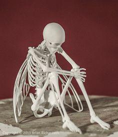 Fée squelette 3D impression taxidermie par MythicArticulations