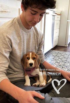 Mis 2 cosas favoritas cachorros y Milo