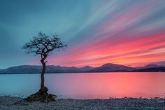 Lonely Tree by Matthias Haker on 500px