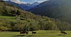 Asturias, un paraíso para deleitarte todo el año - Blog turístico de Asturias